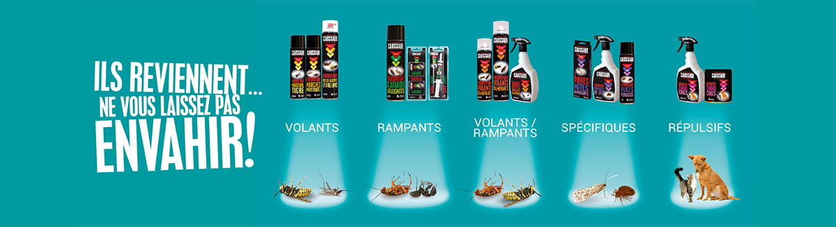 categorie insectes rampants